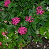 【ミラーレス】可愛いお花を撮影してきました!