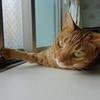 猫さんの最近のお気に入り