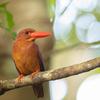2019年6月29-30日の鳥撮り-石垣(2/2)
