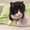 猫とお風呂。