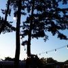 済州島(チェジュ島)人気スポット #漢拏樹木園ナイトマーケットがOPEN!