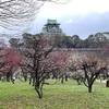 大阪城公園の梅林に行ってきました2020