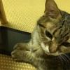 愛猫の食欲不振と嘔吐が続き体調悪化で入院です。