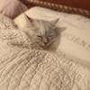 小関家の猫がwww