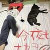 甲斐犬サンの日常〜訓練ト食べルト寝ルト(๑˃̵ᴗ˂̵)❤︎