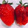 腹さわぐ苺たち