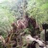 それは,倒れた翁杉の残骸だった.樹齢2000年の巨樹だった.生あるものは,必ず死を迎える.  数千年生きた巨樹もいつかは命を終える.「その時登ってきよったんですね.そしてら,下ってくる人が,『翁杉が倒れてる』って言うから,もう全く冗談だろうと思ったんですよ」「天気のいい,風もない---.ほんとに快晴でしたね」「しっかりと,また,次の世代のが生えてますよ.  空間が広くなって光が差し込むようになって,こんなにして,また---」