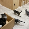 モフアニマルカフェ(高崎オーパー店)|猫カフェの雰囲気・特徴など:群馬県高崎市