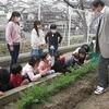 やまびこ:にんじん収穫
