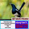 Obat Sesak Nafas Burung Kacer