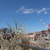 屋上庭園の白い春、桜まつりでは「峠の茶屋」を出しました