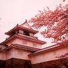 2018[悠久山公園]桜(花見)見頃は?開花予想,ライトアップ,桜祭り,駐車場を紹介!