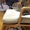 サイベリアン 子猫 お気に入りの遊び