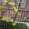 春の庭と今日のおやつ