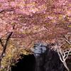 桜の奥にあるトンネル - 新城市