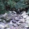 福岡の渓流調査