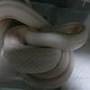5/20 ヘビにご飯。