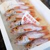 2017年5月20日 小浜漁港 お魚情報