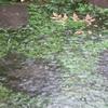 ゲリラ豪雨