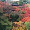 紅葉とお庭の東福寺