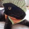 メロン猫・・(*^_^*)