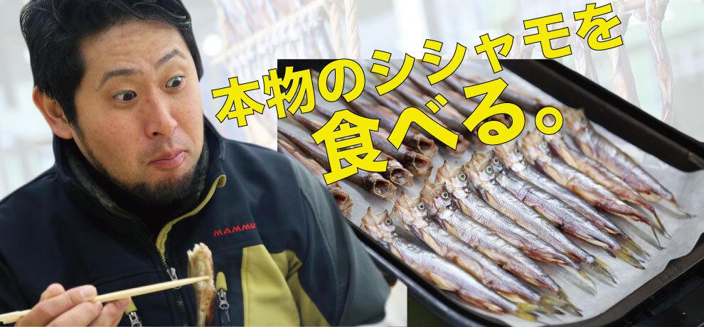"""北海道にしかいない「本物のシシャモ」を知っているか? 珍魚ハンターが""""シシャモの聖地""""に突撃してきた"""