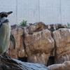 【ペンギン好き必見!】長崎ペンギン水族館は県外からわざわざ訪れる価値あり