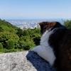 おとぎの国に迷い込んだみたい!(^日常から離れて..オーガニックなランチと神戸の景色とハーブに癒された一日。