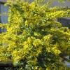 木々の花を見上げる春は