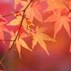 11月の星からのメッセージ☆彡牡羊座~乙女座