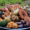 肴の秋の季節料理・・・『天然きのこ料理』そろそろ始まりそうです!!