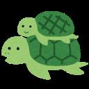 Tortoise and me
