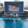 名古屋港水族館が混雑時の楽しみ方をお得情報やランチスポットと共に紹介する
