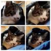 実家の猫さんが眠るまでの四コマ