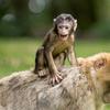 天王寺動物園のちょっと悲しいサルにまつわるエピソード。