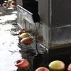 足湯の旅14 だいこん足の湯、再び(りんご入り)