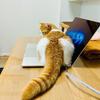 なぜこんなにパソコンの上が好きなんだろう?テレワーク中の愛猫