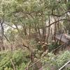 リゾナーレ熱海「森の空中基地くすくす」と遊歩道(無料)