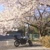 ちょっとだけ桜吹雪