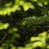 【詳しい】森林セラピー、森林浴、自然体験の本のブックレビューをまとめてご紹介