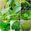 料理に使える南国植物|チャプルーとピパーチ、琉球百薬&月桃+フーチバー+ツボクサ+モリンガ+エアポテト