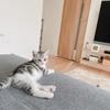 子猫から使えるウォーターノズル!飲ませ方と我が家の失敗談