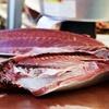 養殖と畜養の違いにピンサバも関係!鯖の乱獲で忍び寄る危険回避