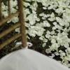 結婚準備 ハプニング!日本語と英語では花言葉の意味が違う?