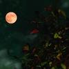 きょうはストロベリームーン、色々な月