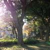芝公園ハレーション
