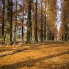鶴見緑地公園のメタセコイヤ並木をちょっとだけ@2019
