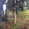 道宗道トレイルで五箇山の歴史に触れた秋の休日(後編)