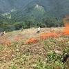 【椎葉村(宮崎)】「焼畑」は、森を育む「自然循環農法」