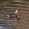 黒目川の野鳥2019